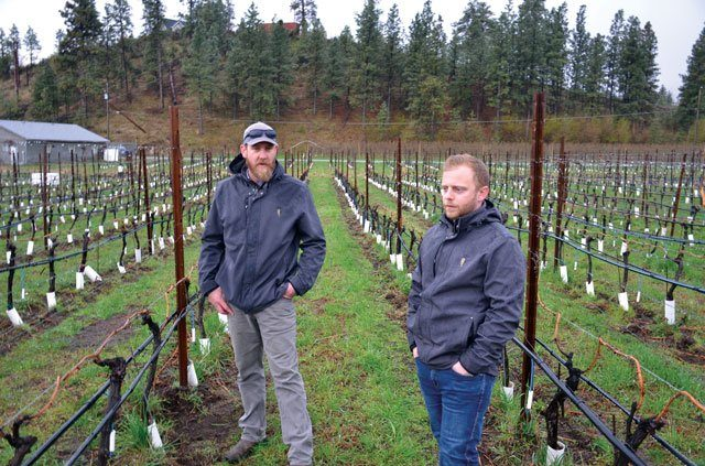 Rob Achurch and the viticulture team at Mission Hill are spending a lot more time in the vineyards as Mission Hill transitions to organic growing. Credit: orchardandvine.net